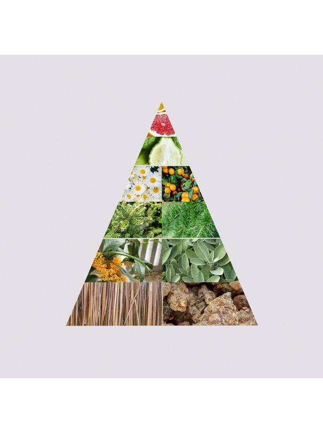 Pine Tree + Vetiver Alcohol-free Fine Fragrance